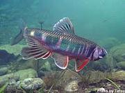 淡水魚をこよなく愛する会