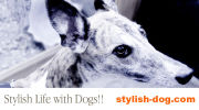 Stylish Life with Dogs!!