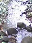 久米島の環境学習や観察会