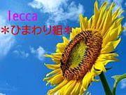 lecca *ひまわり組*