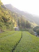 仁淀川町(旧池川)