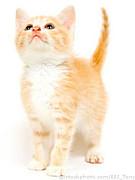 猫好きメンヘラー