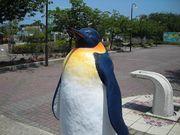 金浦のペンギン
