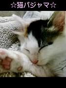 パジャマパーティ部☆猫パジャマ
