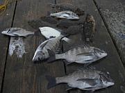 筏で黒鯛が釣りたい
