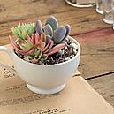 succulent plants shop   HOME