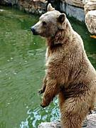 熊を素手で倒す
