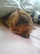 動けるデブ猫