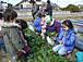 三重県で農業や菜園を始めよう!