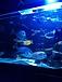 大型海水魚水槽