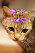 猫カフェ にゃんころ 秋葉原