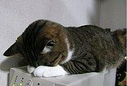 ユニークな猫の名前(*ノωノ)