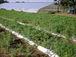 農業体験の浅野農園