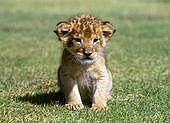 金曜日のライオンwith TEN