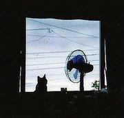 猫と扇風機と仲間達