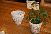 森のCafe(カフェ)