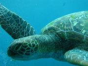 セブ島モアルボアルでダイビング