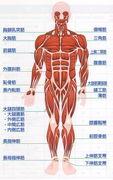 筋肉のイメージを変える!!