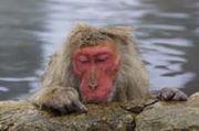 湯猿14のコミュニティ