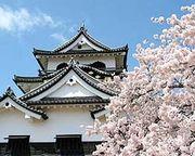 彦根城は素晴らしい!!