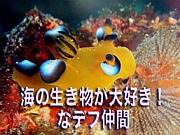 海の生き物が大好き!なデフ仲間