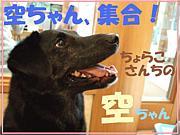 空ちゃん、集合!(わんこ)