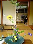 伊万里高校茶道部(19年度卒)
