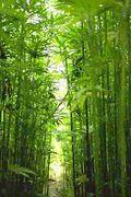 日本麻畑育成会