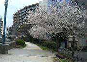 桜本中学校