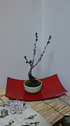 ミニ盆栽サークル