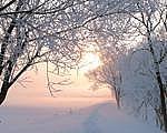 冬の陽射しが好き