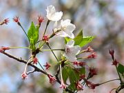 葉桜で花見