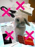 ウサギさんに安全な環境を