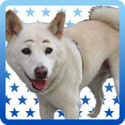 まゆげ犬さん
