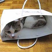 鞄が重くなる病気。