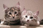 【猫の病気】体験談・新情報等