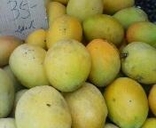 愛するマンゴー!!