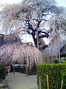 ライドシェア東京国分寺周辺
