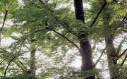 けやの森学園