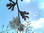 大倉山公園でお散歩(神戸)