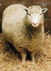 クレオスクエア羊の会
