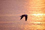 人生、渡り鳥