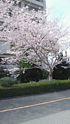 宮大社シス(2004年度入学)