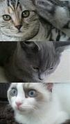 高松猫カフェ『もふもふ』