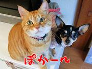 正宗にぃちゃん(トラ猫)