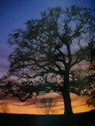 木のヒーリング