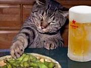 寂しがり屋のビール好き