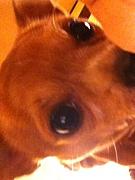 犬好き★ペット用品★オシャレ服