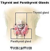 甲状腺・副甲状腺機能の病気
