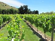 NZワイン留学&ワイナリーツアー